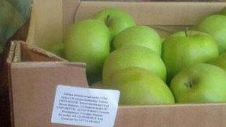 В Саратове уничтожили польские яблоки