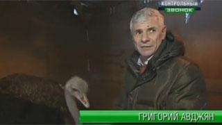 Главе администрации Заводского района пригрозили страусом