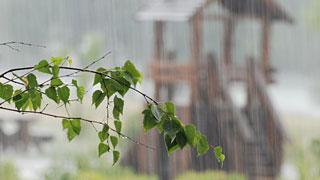 В Саратовскую область приходят ливни и холод