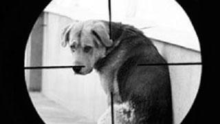 Догхантеров предложили отправлять на обследование к ветеринарам