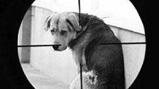 «Догхантеры» используют для травли животных детей и подростков