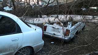 Почти 300 абонентов остались без газа из-за рухнувшего дерева