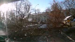 Видеорегистратор снял на видео падение дерева на проезжую часть
