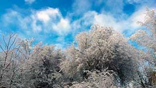 В Саратовской области прогнозируются морозы до -23 градусов
