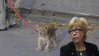 Детский омбудсмен: Надо разделить льва и ребенка