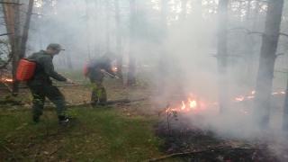 Под Марксом сгорело 5 гектаров сосны